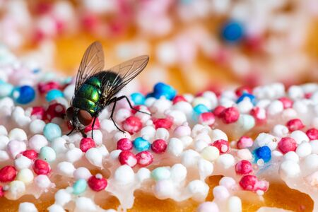 A Gold Fly on Food