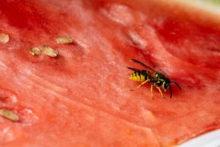 A Dangerous Wasp on Food