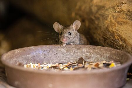 A adorable and cute little mouse