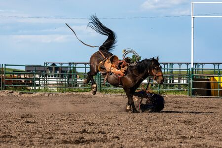 Rodeo and Bronco Riding at Pincher Creek Canada, June 16, 2019