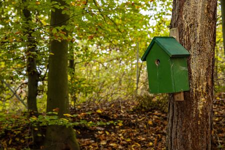 A birdhouse in the forest