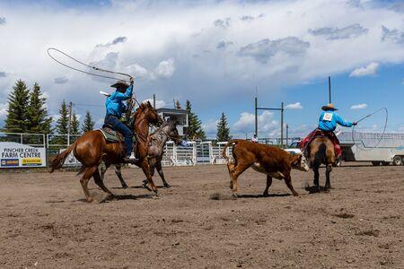 Rodeo Bronco in sella a Pincher Creek Canada Archivio Fotografico
