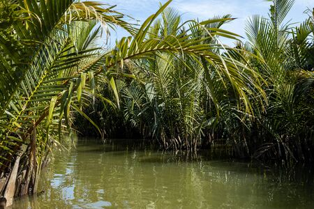 Palm trees on the river at Hoi An in Vietnam Reklamní fotografie