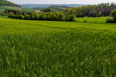 Agriculture and farmland with cereals