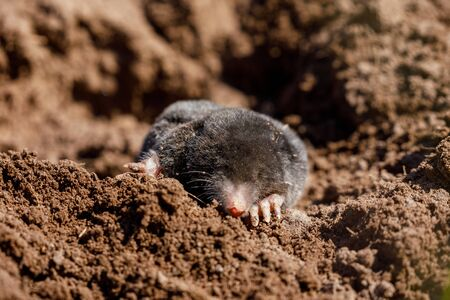 A Mole at a Molehill