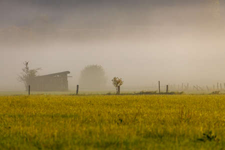 Early morning with fog in the fields Stockfoto