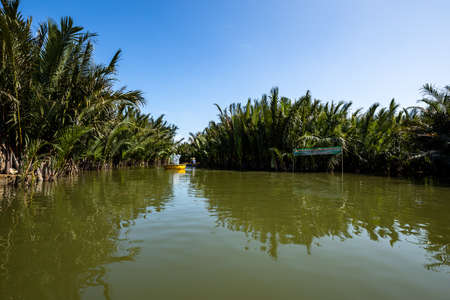 palm trees on the river at Hoi An in Vietnam