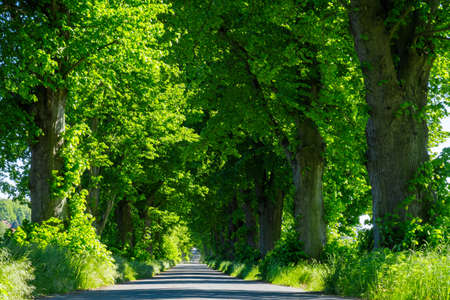 A Alley of Trees in the Summer Stock Photo