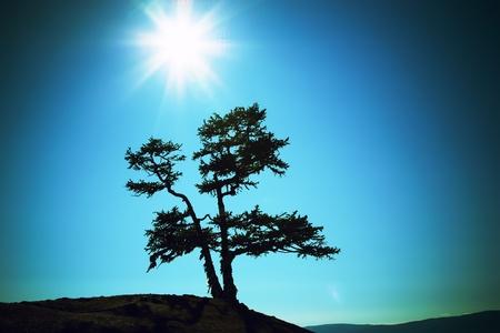 Silhouette of a tree against the sun lake Baikal photo