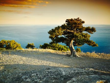 Tree and sea at sunset. Crimea landscape. Nature background photo