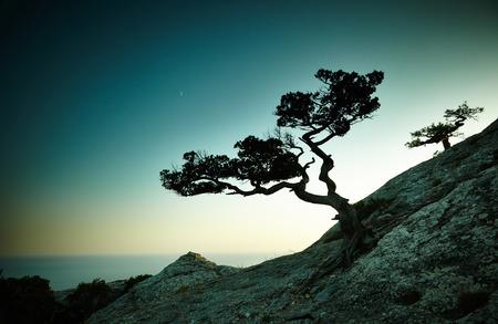 樹和海上日落。克里米亞景觀。自然背景 版權商用圖片