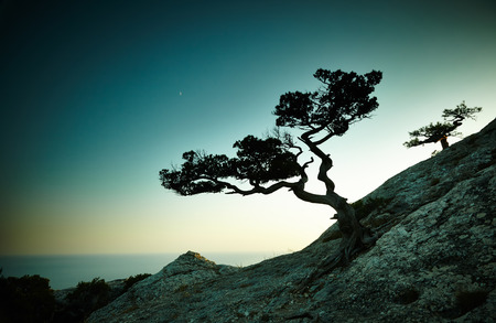 Tree and sea at sunset. Crimea landscape. Nature background Banco de Imagens - 32199596