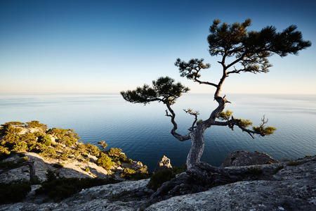 eventide: Tree and sea at sunset. Crimea landscape. Nature background