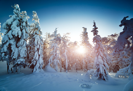 ural: Fairy winter landscape with snow covered trees. Fantastic winter landscape. Dramatic overcast sky. Beauty world. Snowy forest