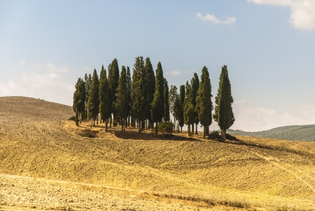 valdorcia: The Val d%uFFFDOrcia, or Valdorcia, a region of Tuscany, central Italy  It is characterised by gentle, carefully cultivated hills   Stock Photo