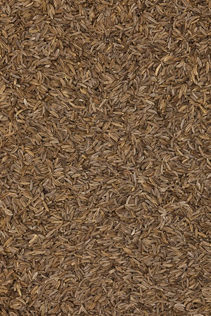 fennel seed: Caraway seeds, can be used as a background Stock Photo