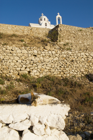 Cat in the sun at the foot of the Pigadia Cemetery, Karpathos island, Greece