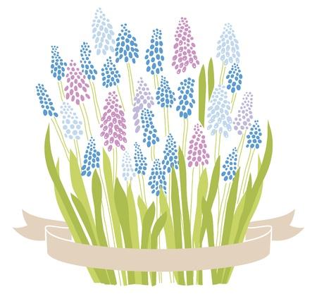 블루 포도 히 아 신 muscari입니다 봄 꽃 꽃다발 일러스트