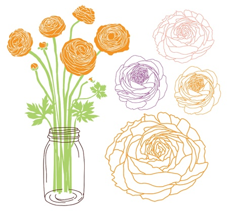 Ranunculus flower bouquet in a jar  Stock Vector - 20273703