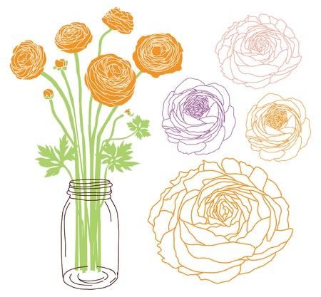 ranunculus: Ranunculus flower bouquet in a jar