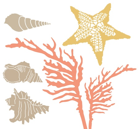sea shells on beach: Corals, starfish and shells