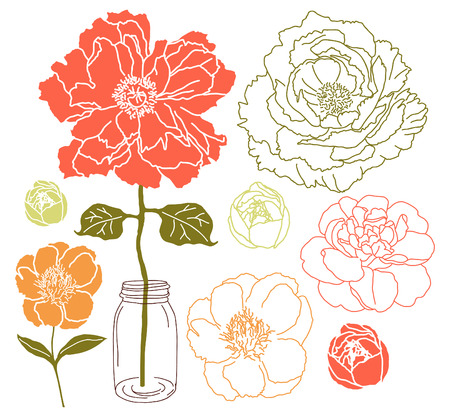 jars: peony flower and rose  Illustration