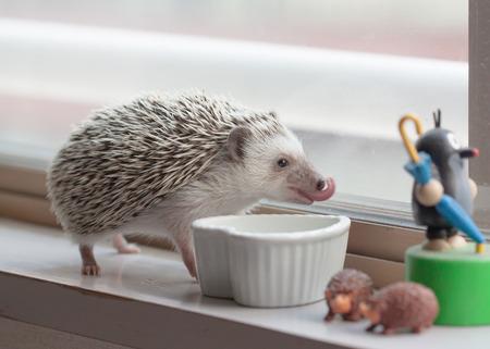 Life of cute hedgehog in the room