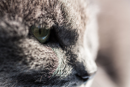 startled: my gray cat cool face
