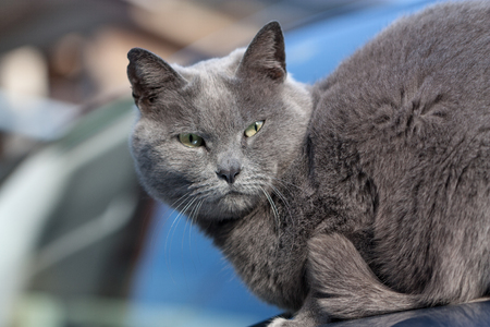 my gray cat cool face