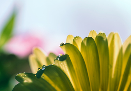 Flowers with dew in the early morning Stock Photo