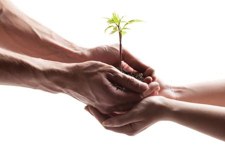 planta con raiz: inseminaci?n artificial
