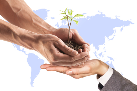 plant hand: Young plant in hand on the field background. Elements of this image furnished by NASA