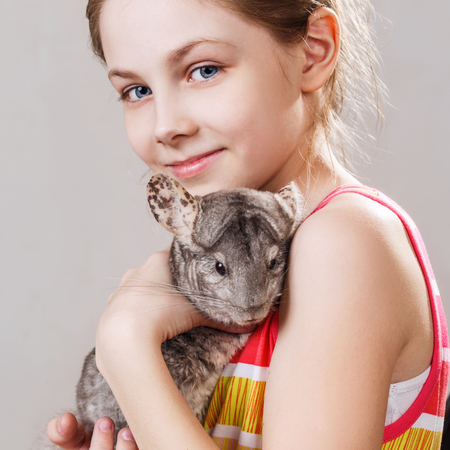 Cute smiling little girl holds funny gray chinchilla.