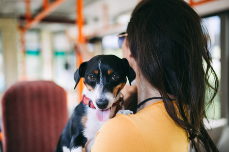 Beautiful young woman standing in city bus with her jack russell terrier.