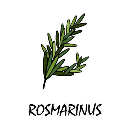 odorous: rosmarinus flat icon Illustration