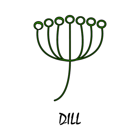 dill: dill flat icon