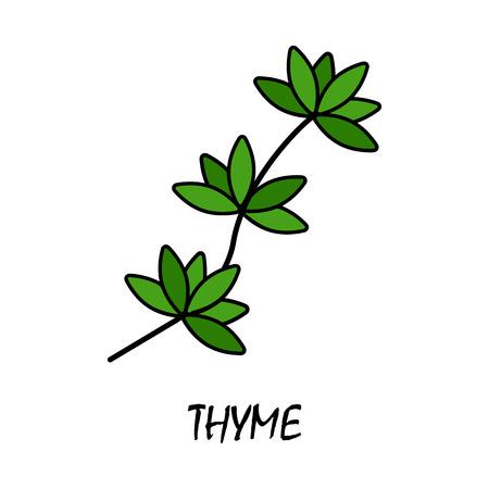 thyme flat icon