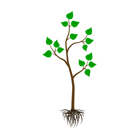 Seedling tree flat icon. Illustration