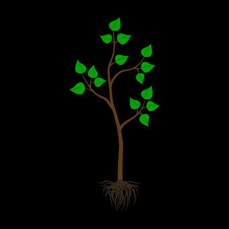 cross section of tree: Seedling tree flat icon