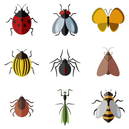 stag beetle: insects flat icon set Illustration