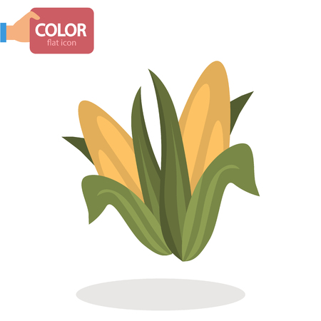 Corn cobs flat color icon Illustration