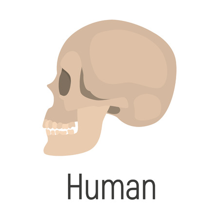 Huan skull color vector icon. Flat design