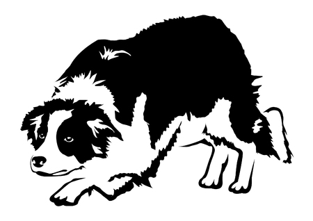Border Coli dog vector illustration