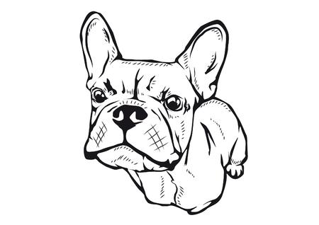french bulldog vector illustration Ilustrace