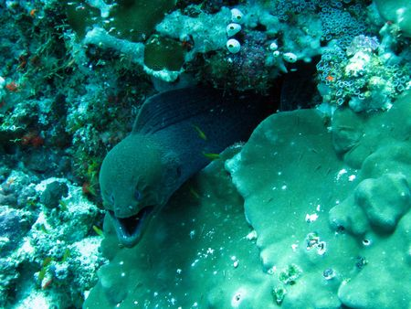 Image of a moray eel taken underwater in Maldives.  He was not happy about me getting too close...   Imagens