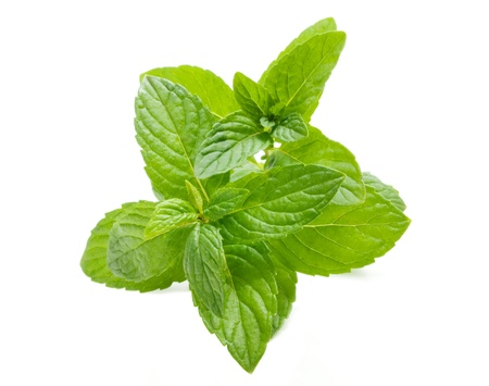 Mint on a white background Stock Photo - 9191248