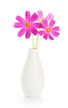 closeup of pink daisy with: Beautiful pink flowers in white vase