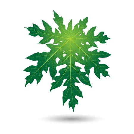 papaya: papaya leaf Illustration
