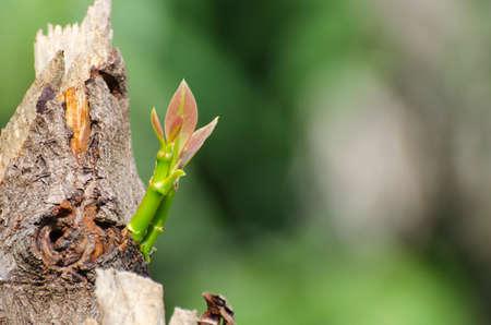 regeneration: Beautiful, bright green tree regeneration in the morning.