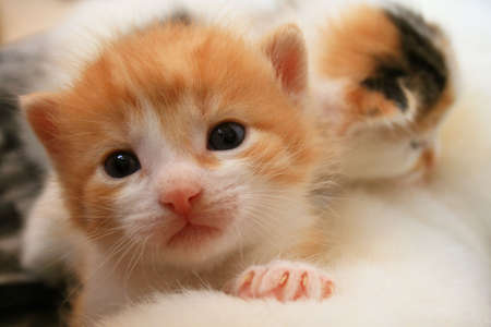 adorable  calico kittens